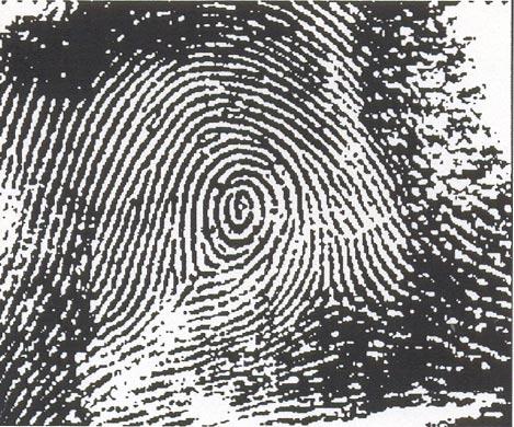 Peacock's Eye - Finger Print
