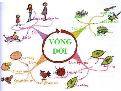vong-doi-2-8178-1395914381